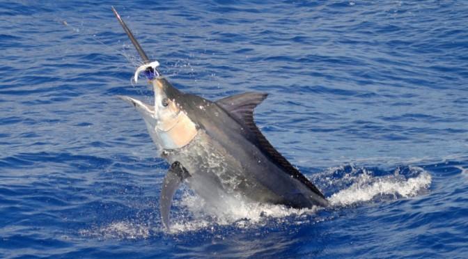 Big Game Fishing In Mauritiusbig-game-fishing-mauritius-