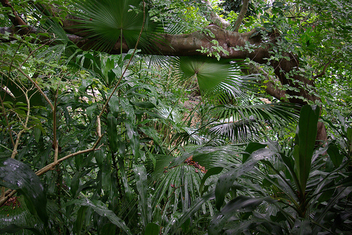 Things To Do In MauritiusVisit The Island's Nature Parks.