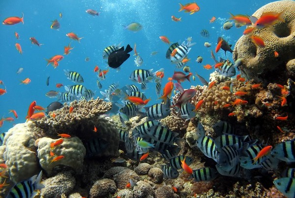 Vie Aquatique Renionnaise