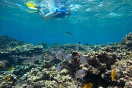 Snorkeling at Sainte Anne Marine National Park