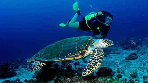 Snorkeling In Seyche;lles