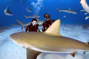 Plongée requin Seychelles