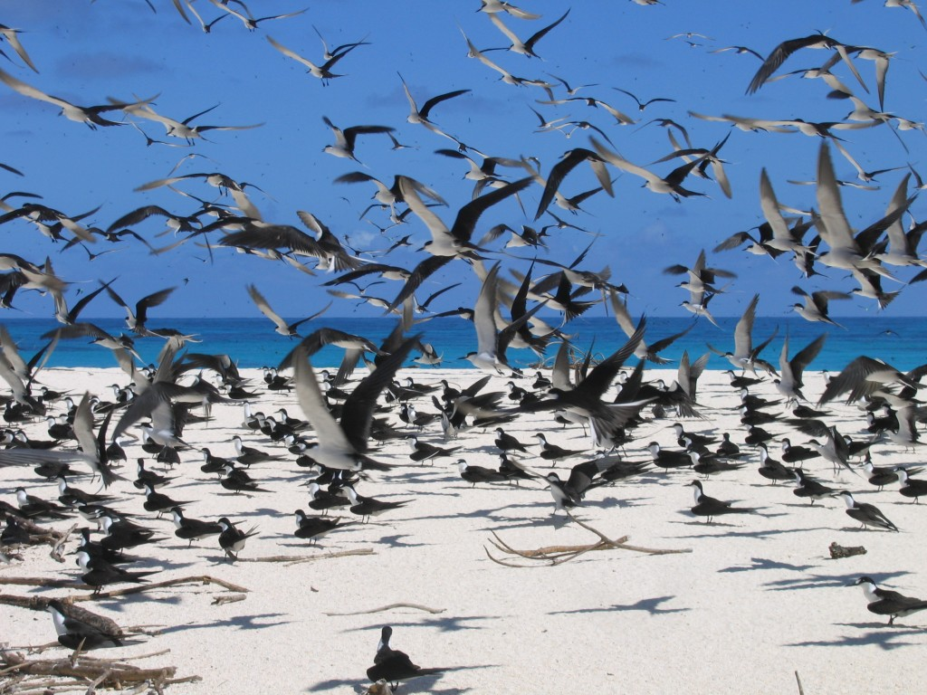Bird Island- Flock of birds