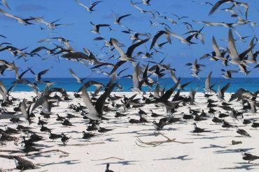 Bird Island- Flock of birds