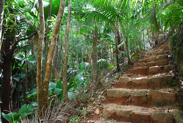 Praslin Seychelles Vallee De Mai