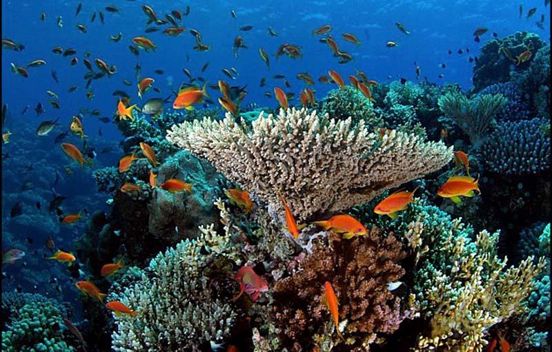 Recif-corallien Réunion