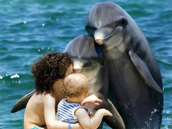 nager-avec-dauphin-ile-maurice