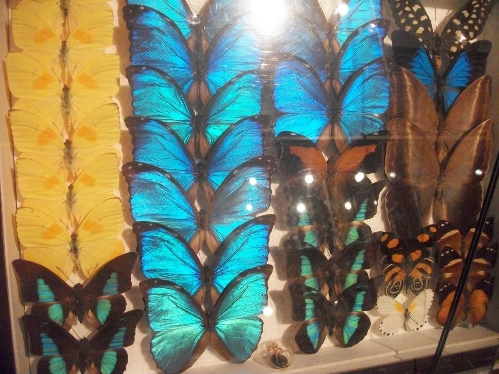Butterflies Species Insectarium