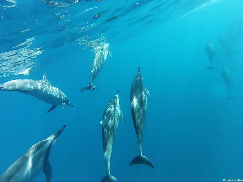 Caro et Dino Dolphin