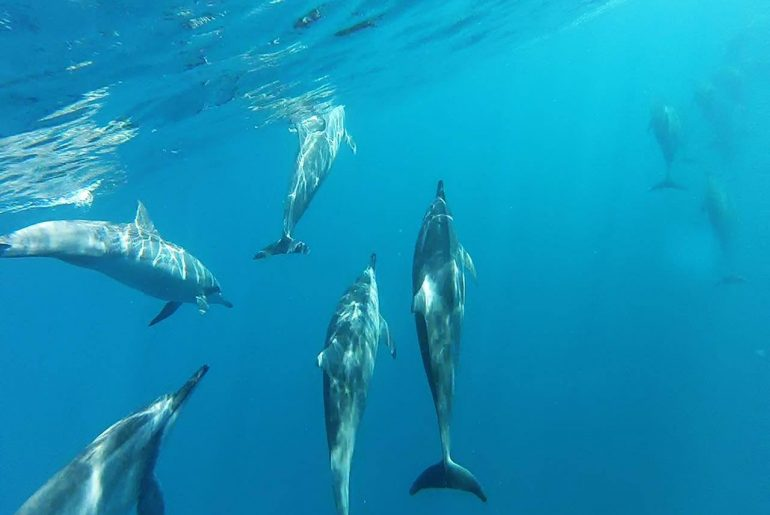 Swim with dolphins in Mauritius
