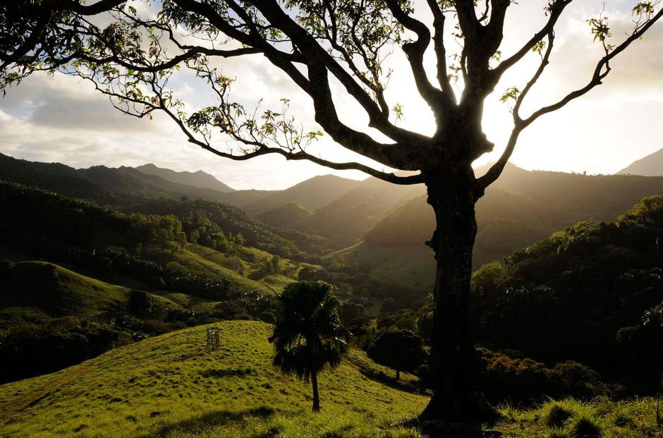 Fauna and Flora Mauritius