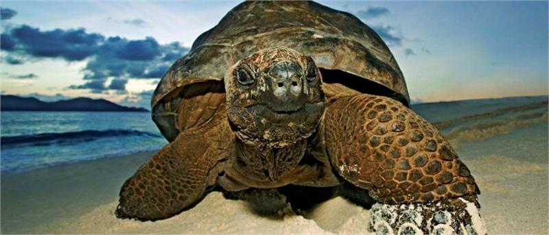 Giant Tortoise Seychelles