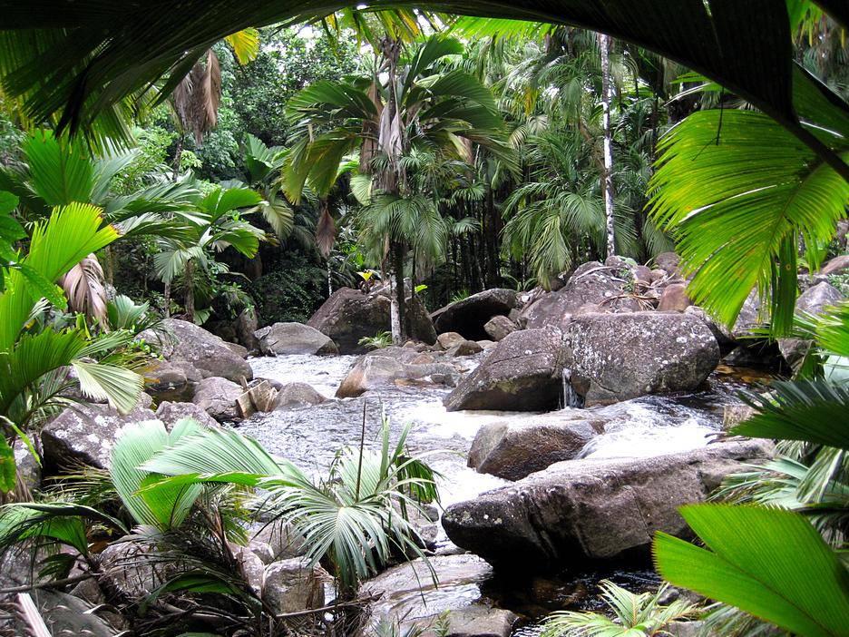 Mahe Waterfall Seychelles