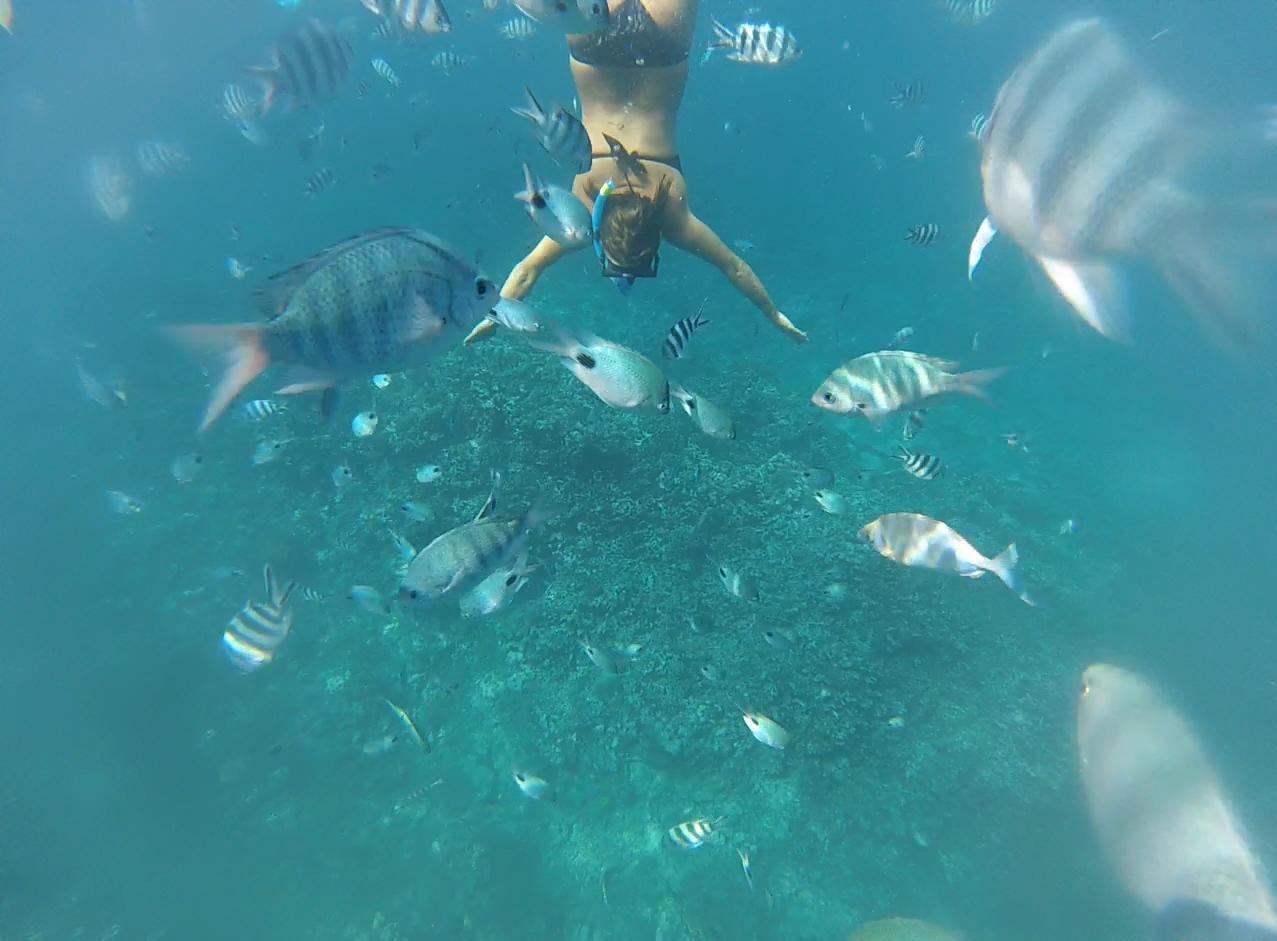 ile-maurice-excursions-bateau-prive-caro-des-iles-tamarin-nager-avec-les-dauphins-ile-maurice-apnee-prive-gopro-voyage-vacances-1 (1)