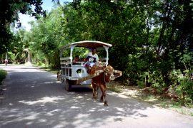 La Digue- Ox Carts