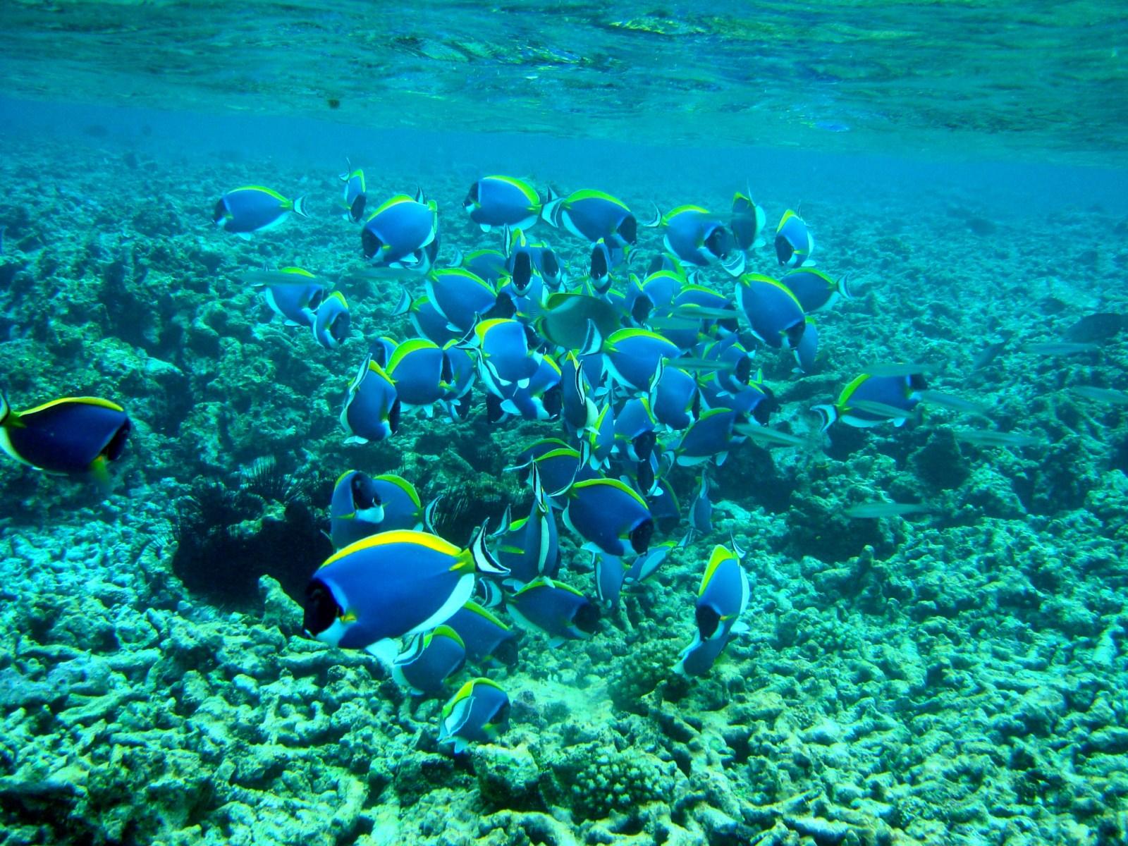 Diving Seychelles