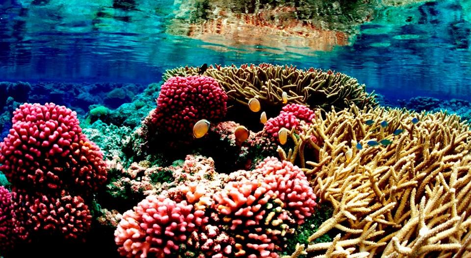 """The """"natural aquarium"""" in Tamarin"""