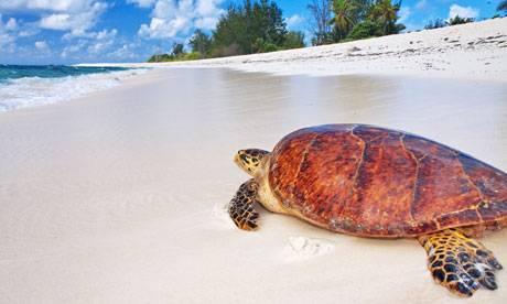 île du nord: tortues