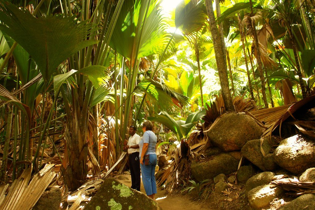 National-Park-Coco-De-Mer-.-Praslin-,-Seychelles