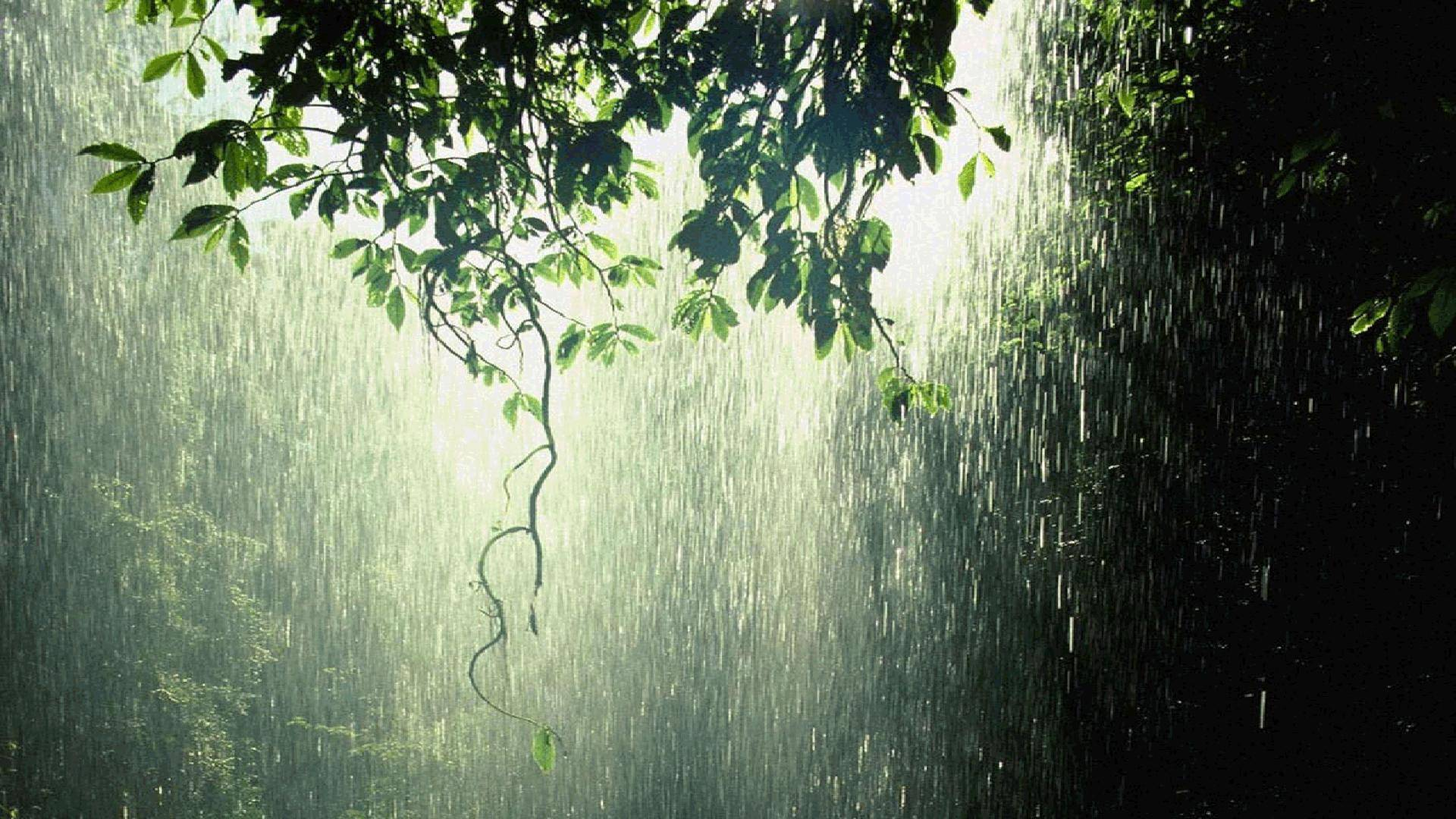 Rainfall in Mauritius