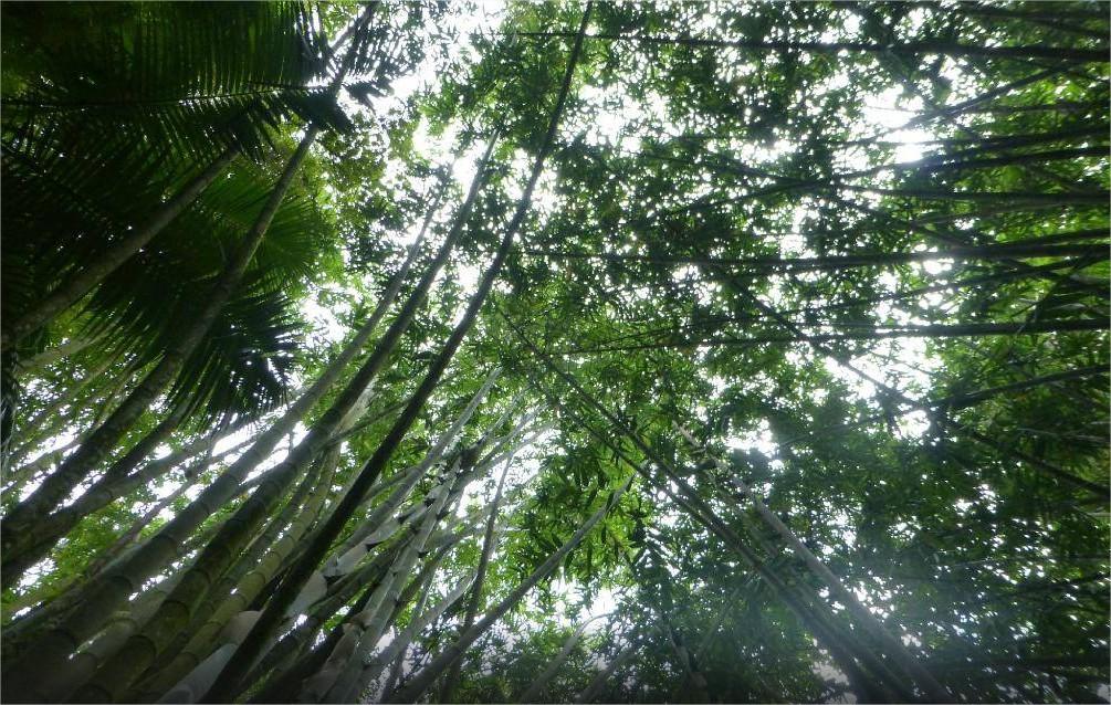 """Jardin Du Roi"" Spice Garden Seychelles"