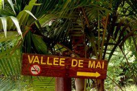 vallee_de_mai_seychelles