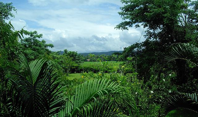 Mauritius-greenery