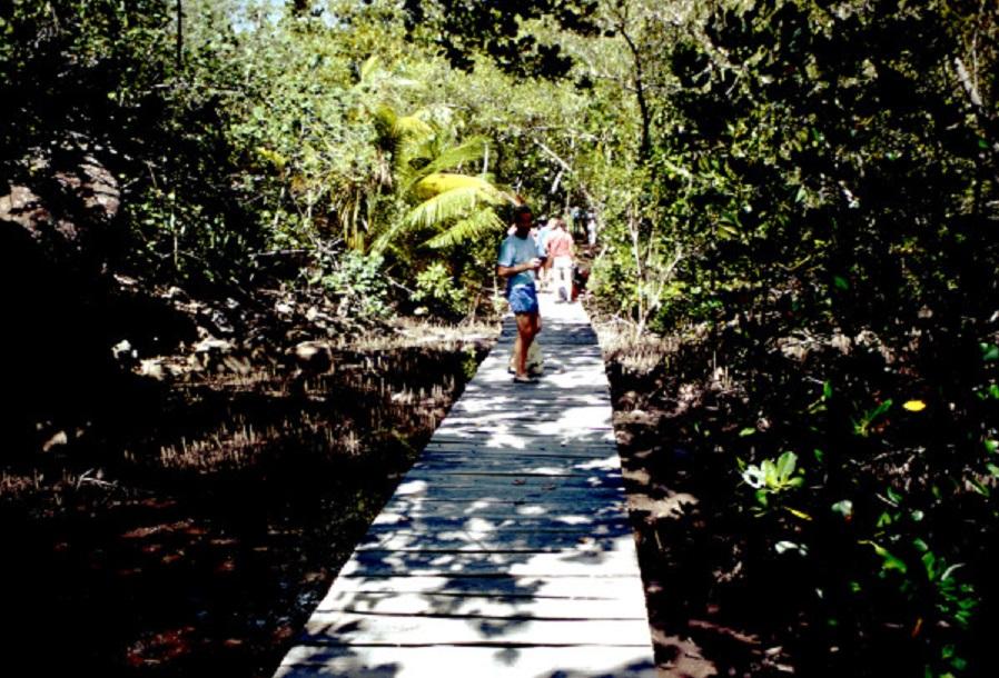forêt-de-mangrove