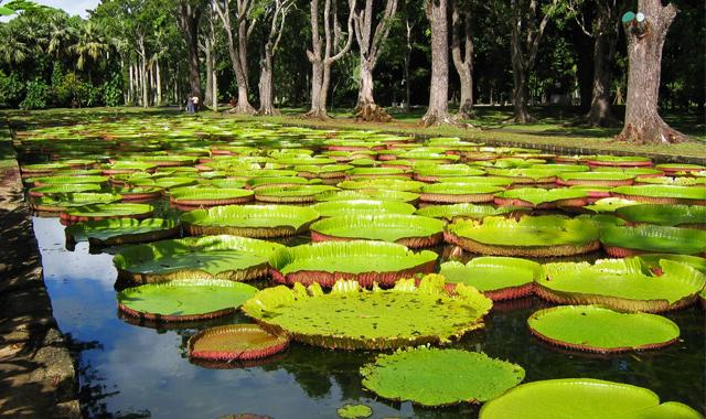 SSR Botanical Garden Pamplemousses