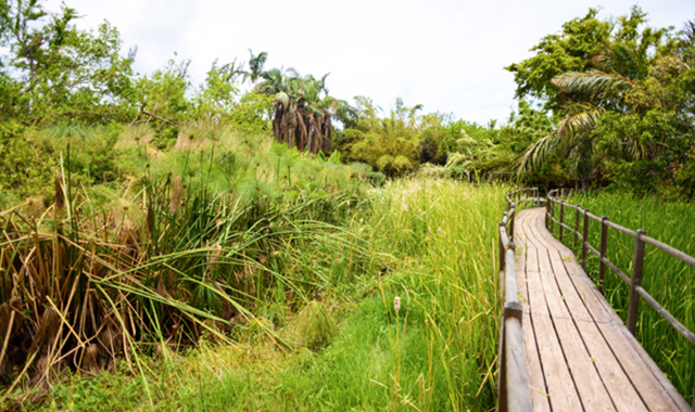 Le Jardin d'Eden- La Réunion
