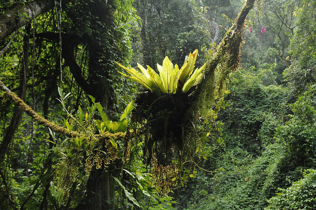 Forêt - Madagascar
