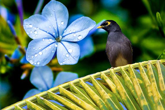 nature Mauritius
