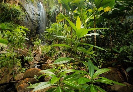 Vallée de Mai- Praslin, Seychelles