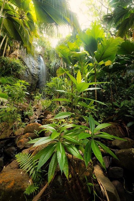 may valley Praslin Seychelles