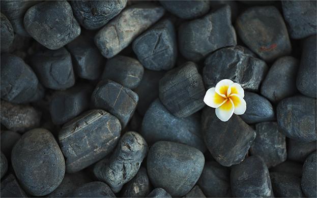 Mauritius Frangipani flower