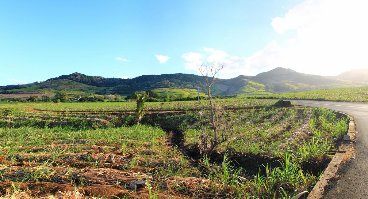 Road south mauritius