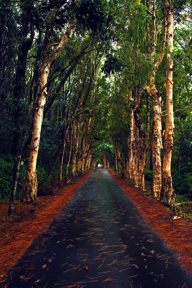 alexandra falls- road