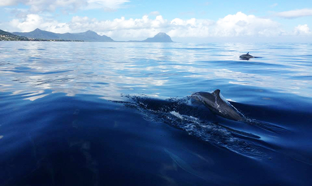 dolphins Mauritius