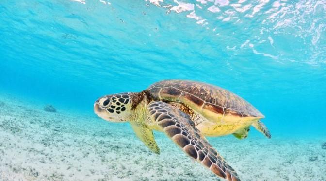 Touristic places in Mauritius