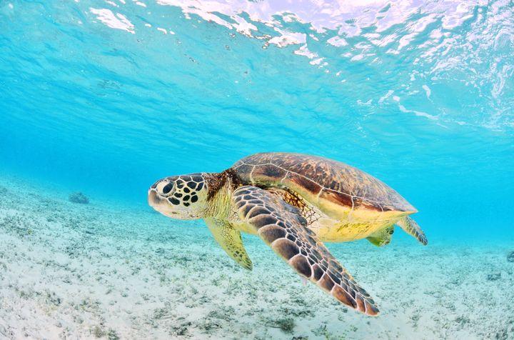 Snorkeling Pointe aux Piments