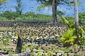 seychelles-bird-island