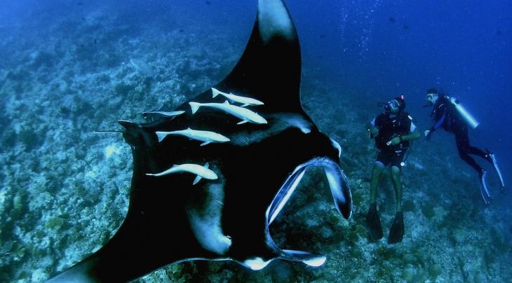 Manta Ray1 Maldives Mar 06