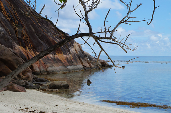 seychelles curieuse beach