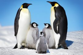 penguins antartica