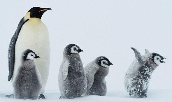 penguins antartica