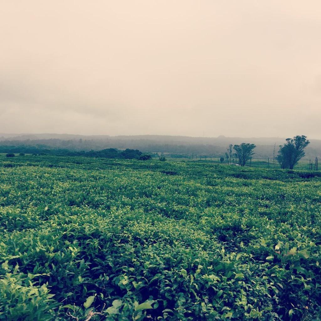 Bois Cheri Mauritius