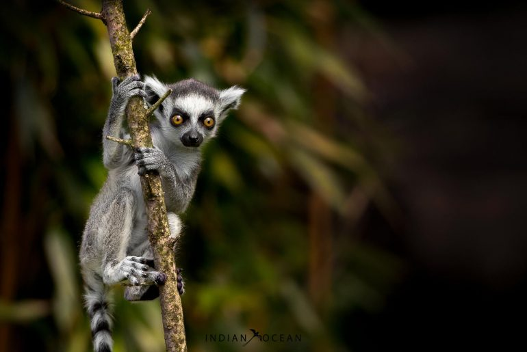 Places to see in Madagascar