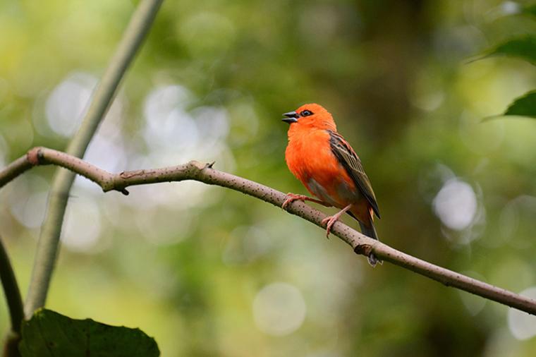 Bird Masoala Madagascar