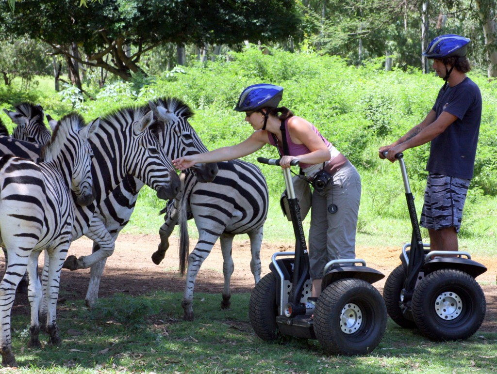 Mauritius attractions: Zebra at Casela