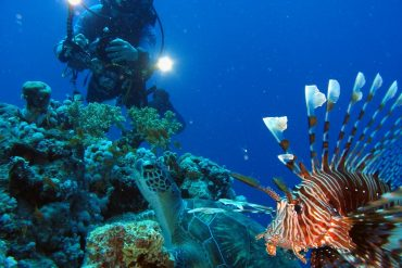 Mauritius attractions: Underwater scene
